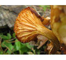 Mushroom Ruffle Photographic Print