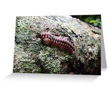 red tractor millipede Greeting Card