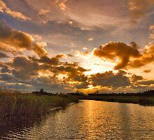 "Nature ""in my backyard""........ by Adri  Padmos"