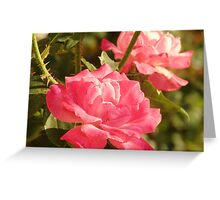 Two Pink Roses Greeting Card