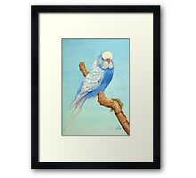 A Budgie in nature Framed Print