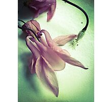 Floral Pink And Green Photographic Print