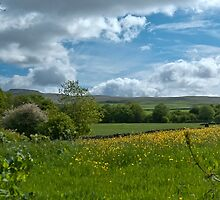 Meadow View to Ingleborough by Sue Knowles