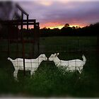 Country Love by LeeAnn Kramer