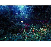 heavenly light leak, kelsey park, beckenham, u.k. Photographic Print