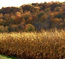 Fall In Newcomerstown, Ohio by Gina Kaye