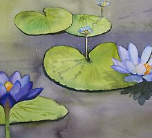 Nymphaea caerulea, lotus flower by ELLJAYBEE