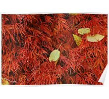 Red leaves in October Poster