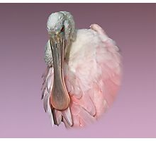 Roseate Spoonbill Photographic Print