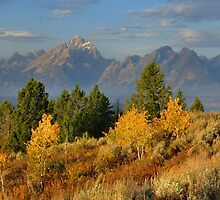 Autumn Morning, The Tetons by Stephen Vecchiotti