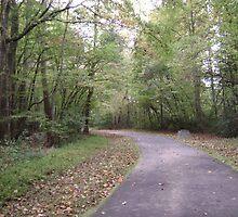A Lone Walk In The Woods by wordsplaytoday