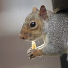 Nuts!!! No thanks, chips for me by Dawn OConnor