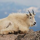 Happy Mountain Goat by Eivor Kuchta