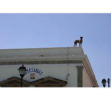 Top dog, Oaxaca, Mexico Photographic Print