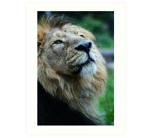 Ashok the Lion King Art Print