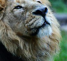 Ashok the Lion King by Wayne Gerard Trotman