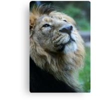 Ashok the Lion King Metal Print