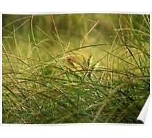 Golden Meadow, September Poster