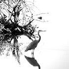 Heron in B&W by Allan  Erickson