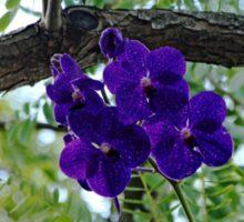Vanda In Purple Sticker