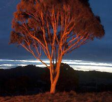 Flame Tree by Greg Wilson