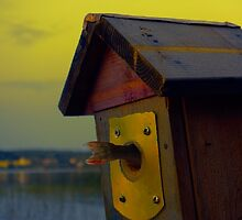 A fishtail coming out from a birdhouse entrance by jekuratodistaja