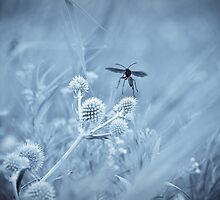 Great Black Wasp by SuzOH
