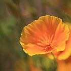 Golden Poppy by Ronda Sliter