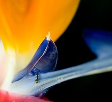 Bird of Paradise ... and guest by JimFilmer