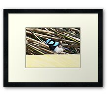 Right back at you. Framed Print