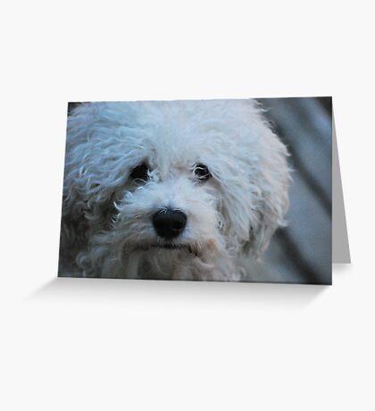 Jak the Bichon Greeting Card