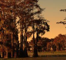 Louisiana bayou at sunset Sticker