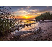 Driftwood Sunset Photographic Print