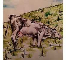 Grazing Cow by Natalie Manifold Photographic Print