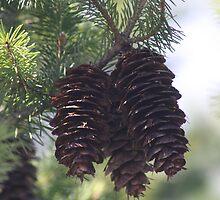 Pinecones by sugerpie