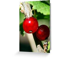 Currant Greeting Card