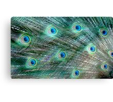 Shake your Tail Feathers Mr Peacock ! Canvas Print