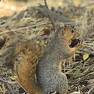 A Squirrels Lunch by Ronda Sliter