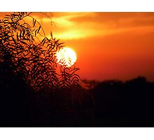 sunset behind a willow - South Africa Photographic Print