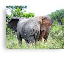 Friends - elephants, South Africa Canvas Print
