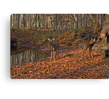 My Bambie friends Canvas Print