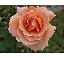 Apricot Beauty Photographic Print