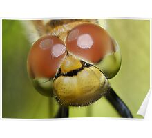 DragonFly Compound Eyes Poster