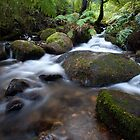 Flow in the Forest by John Robb