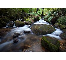 Flow in the Forest Photographic Print