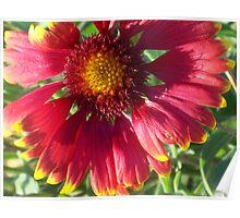 Radient Bloom Poster