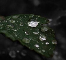 Crystal drops on a leaf by Dirk Pagel