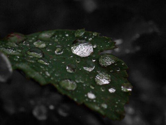 Crystal drops on a leaf by Dirk Pagel