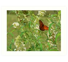"""A Butterfly Enjoying The Nectar Of A Flower"" Art Print"