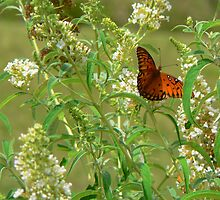 """""""A Butterfly Enjoying The Nectar Of A Flower"""" by franticflagwave"""